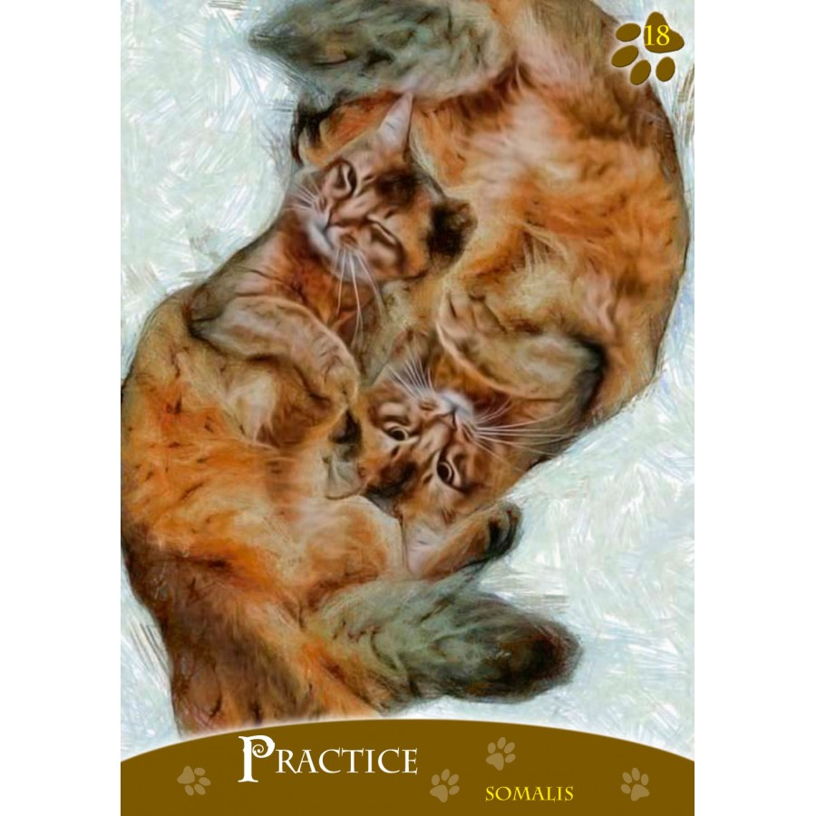 Cats Inspirational Oracle Cards 3