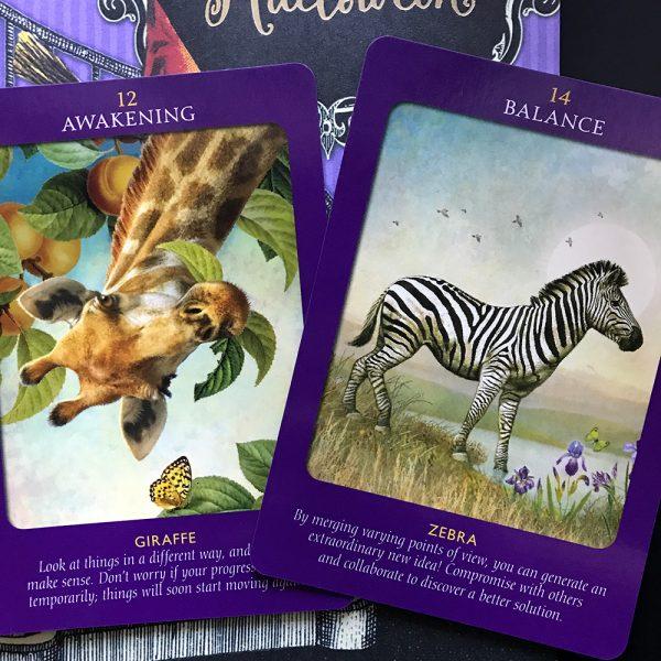 Animal Tarot Cards 4