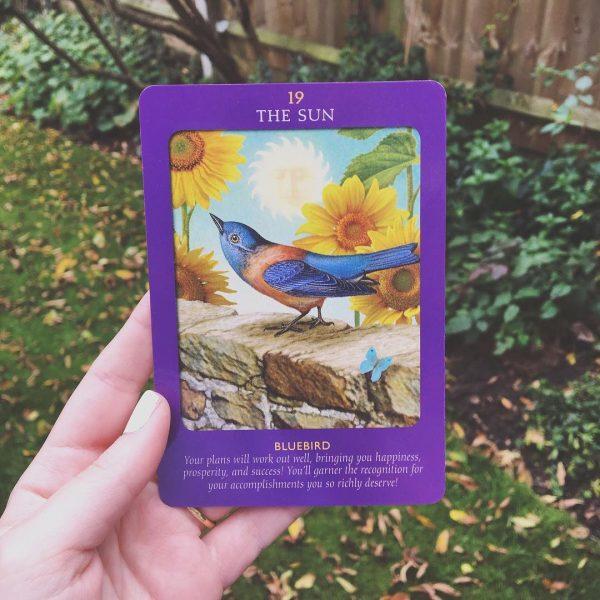 Animal Tarot Cards 6