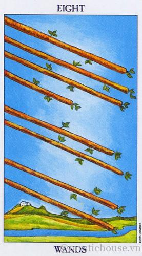 cảm nhận lá bài tarot eight of wands