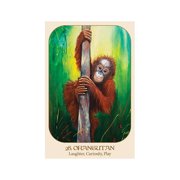 Animal Voices Oracle Connecting with Our Endangered Friends Cards 2