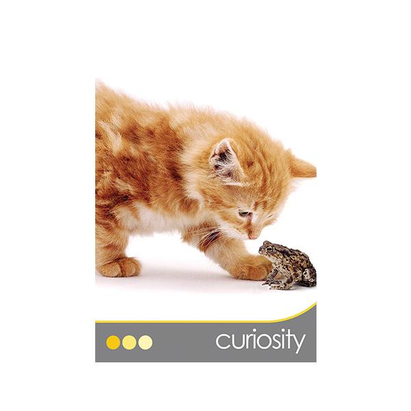 Cat Wisdom 1
