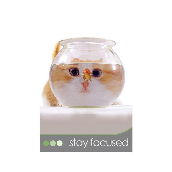 Cat Wisdom 3