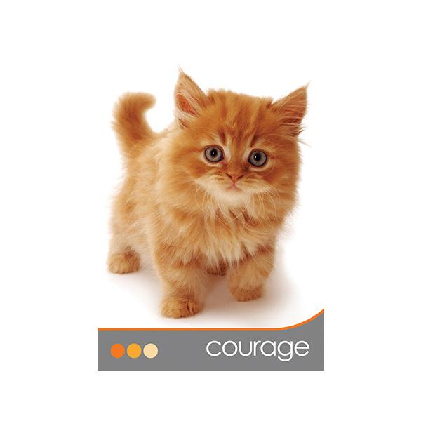 Cat Wisdom 4