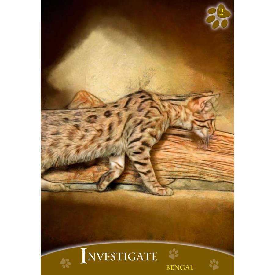 Cats Inspirational Oracle Cards 1