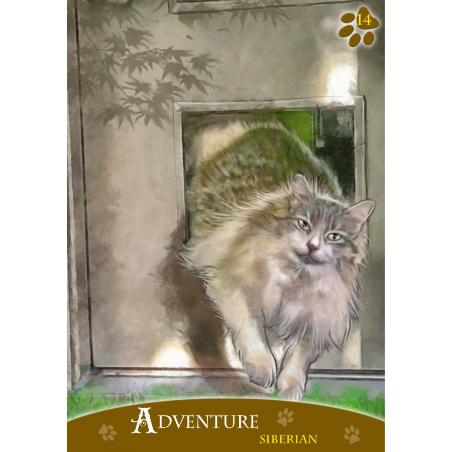 Cats Inspirational Oracle Cards 2