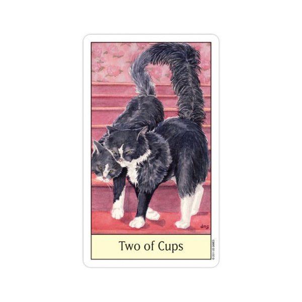 Cats-Eye-Tarot-3