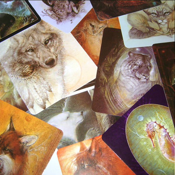 Animal Spirits Knowledge Cards 2