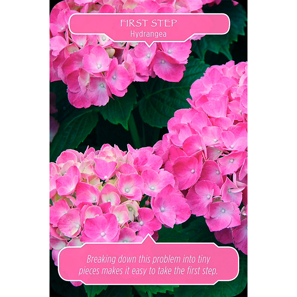 flower-therapy-oracle-cards-3