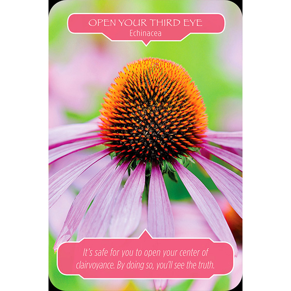 flower-therapy-oracle-cards-4