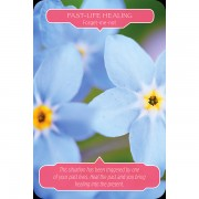 flower-therapy-oracle-cards-6
