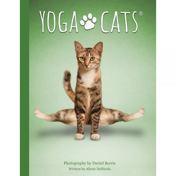 Yoga Cats Oracle 2