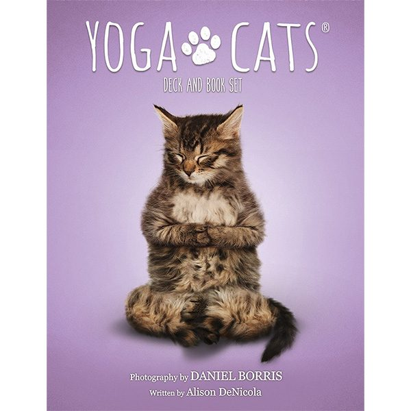 Yoga Cats Oracle