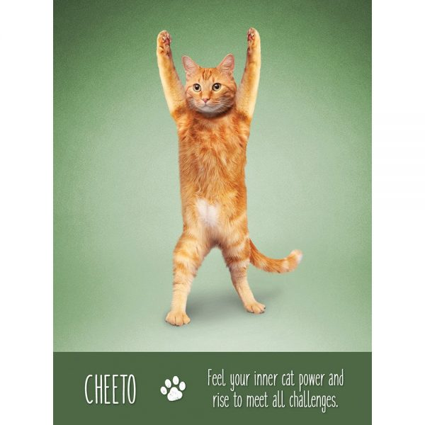 Yoga Cats Oracle 7
