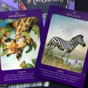 Animal Tarot Cards 4