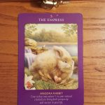 Animal Tarot Cards 7