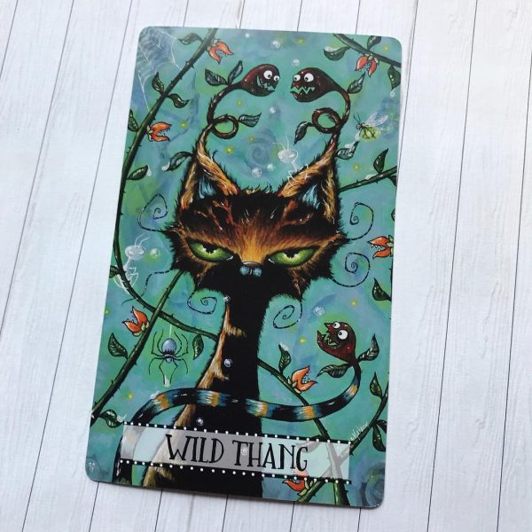 Cat Land Oracle 5