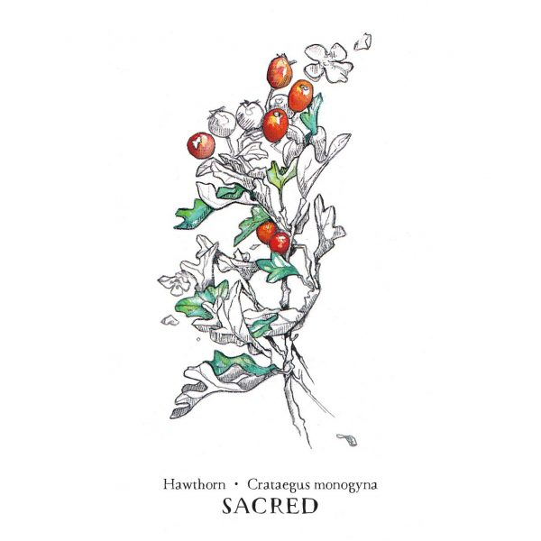 Hedgewitch Botanical Oracle 5