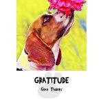 Divine Dog Wisdom Cards 3