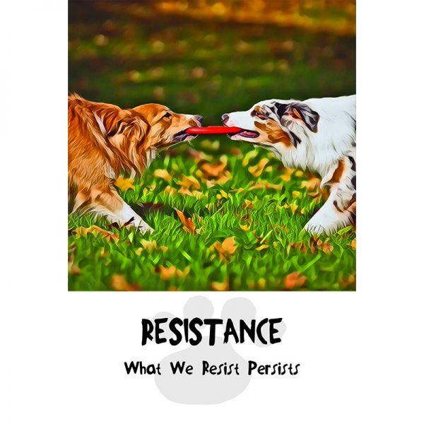 Divine Dog Wisdom Cards 5